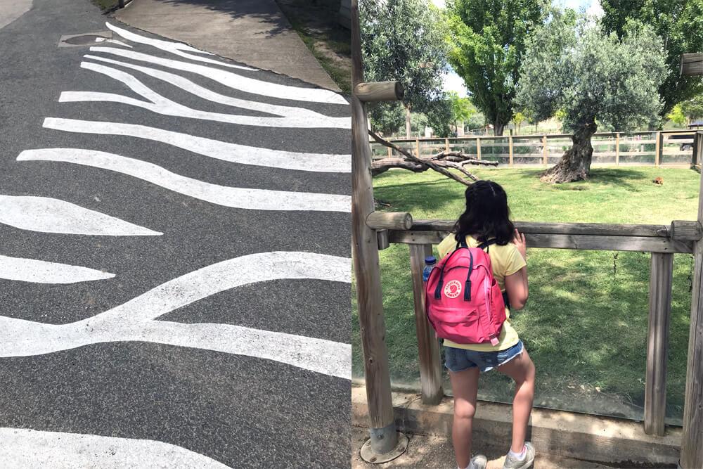 pasos de cebra sendaviva